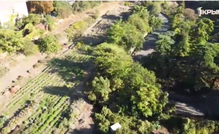 Сколько видов насчитывают южнобережные плантации душистых трав в Никитском ботаническом саду