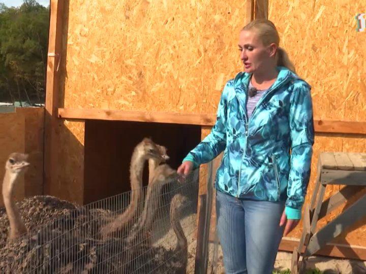 Деревенское счастье страусов