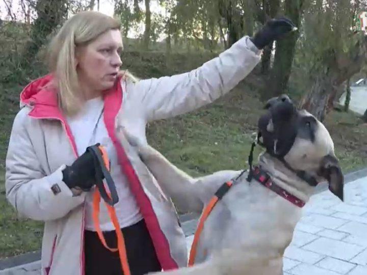 О том, какие правила должны соблюдать владельцы собак