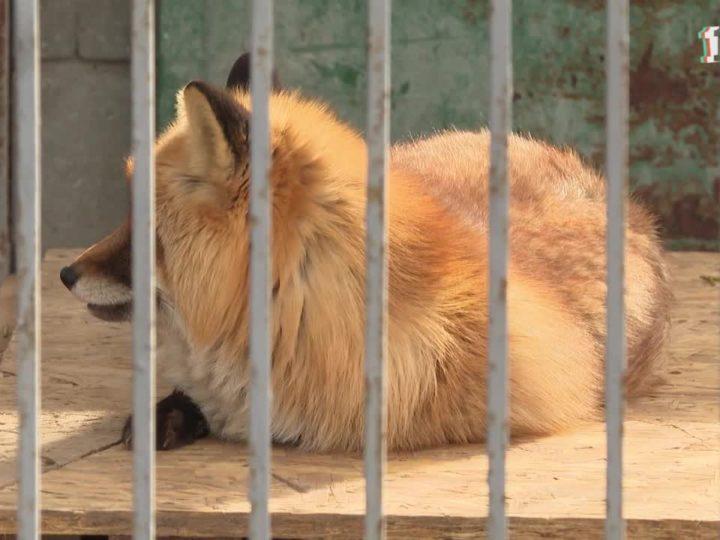 В Симферопольском зоопарке пополнение