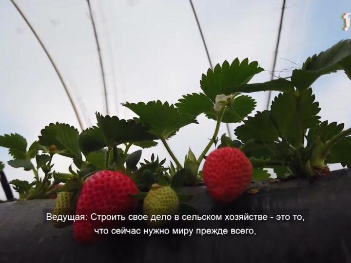 Деревенское счастье со вкусом земляники
