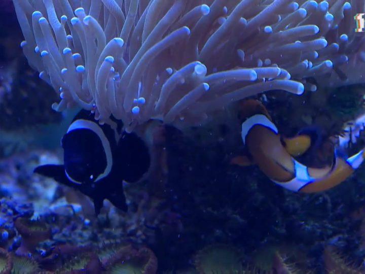 Что интересного можно узнать в аквариуме?