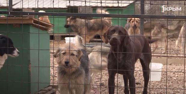 О буднях волонтёров в приюте для бездомных животных